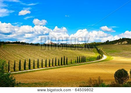Tuscany, Vineyard, Cypress Trees And Road, Rural Landscape, Italy, Europe