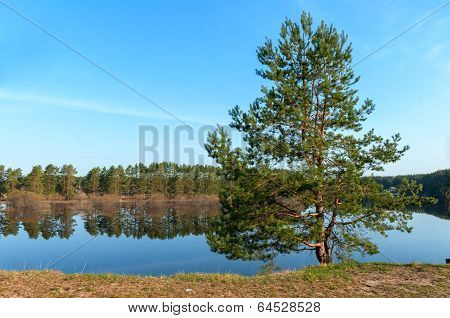 Landscape Of The Tree In The River Bank