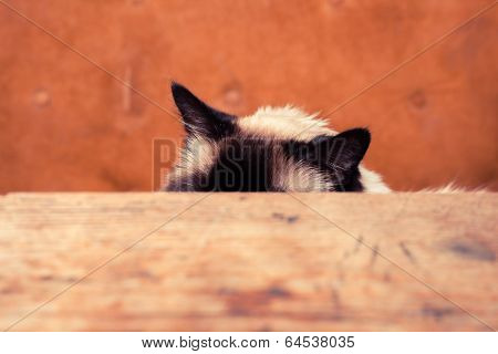 Cat Hiding Behind A Table