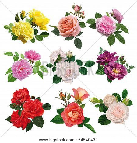 Set of multicolored roses