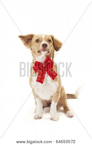 Dog with ribbon posing