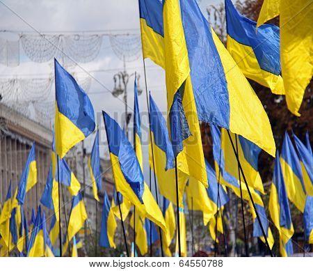 Many Ukranian flags