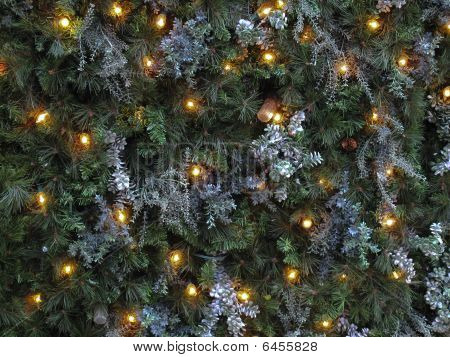 Christmas Lights On Pine