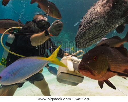 Diver Hand Feeding Fish On Reef Floor Great Barrier Reef Australia