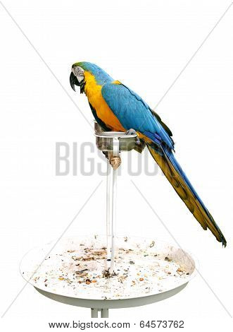 A beautiful Macaw on stand isolated on white