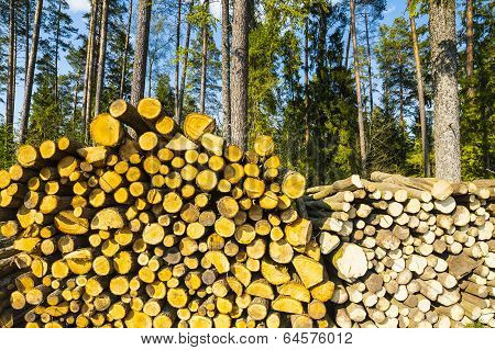 Tree trunks, wood for fireplaces.
