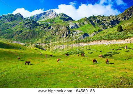 Pyrenees mountains with horses.