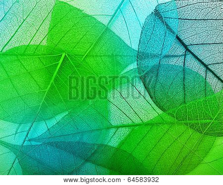 Macro green leaves background texture