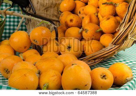 Loquats In Harvesting Basket