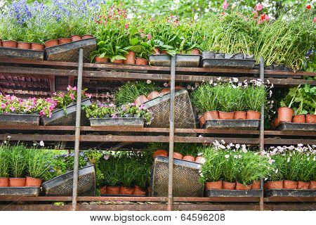 Tidy Potted Flowers On Shelves