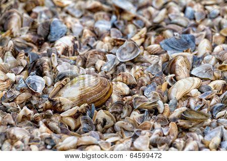 Many Dry Shell