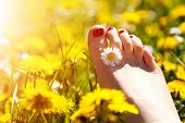 stock photo of lie  - Foot of a young woman with a spring flower in fingers lying on sunny - JPG