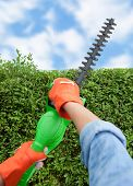 picture of electric trimmer  - Woman trimming bushes using an electrical hedge trimmer - JPG