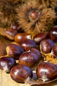 foto of glans  - Autumn chestnuts curly on wood background macro - JPG