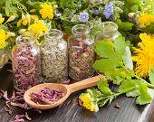 pic of celandine  - healing herbs in glass bottles healthy plants and wooden spoon herbal medicine - JPG