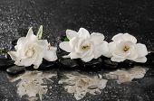 foto of gardenia  - spa concept  - JPG