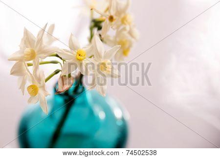 Jack Snipe Daffodil Flowers In A Vase