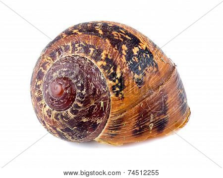 Macro Of Beautiful Abandoned Snail Shell