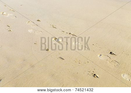 Footprints And Prints Of Walking Stick At The Beachhuman Footprints And Prints Of Walking Stick At T