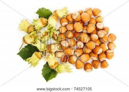 Top View Of Fresh Hazelnut