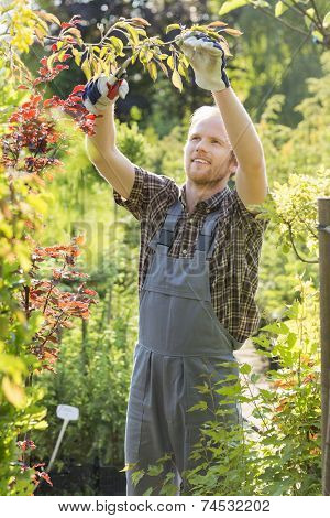Man clipping branch at plant nursery