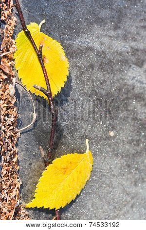Frosts And Fallen Yellow Leaves On Pavement