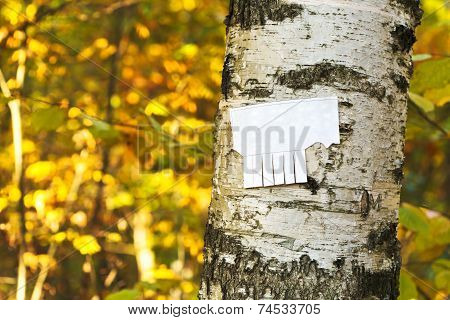 Tear-off Paper Notice On Birch Trunk