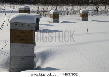 Hives Of Bees In Winter