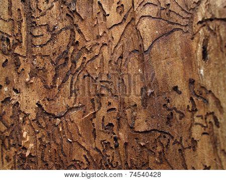 Under the bark