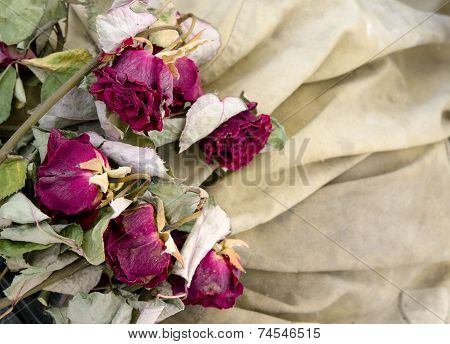 Red Dry Roses  On Beige Background