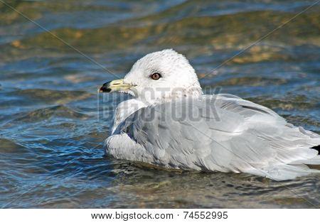 Seagull At The Lake