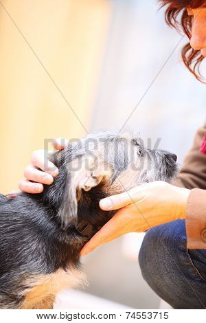 Animals At Home Female Hand Patting Dog Pet Head