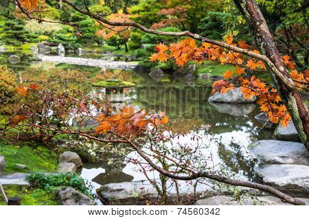 Autumn Maple Japanese Garden