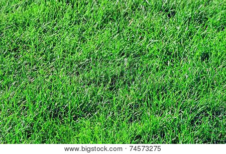 Pesticide Free Healthy Lawn