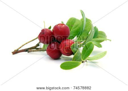 Twig With Cranberries And Leaves