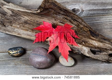 Autumn Red Maple Leaves On Driftwood