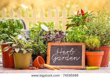 Herb garden at home yard in with pots of herbs in front of fence