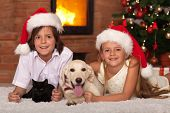 image of dog christmas  - Happy kids and their pets celebrating Christmas together  - JPG