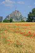 picture of mont saint michel  - Cornfield with poppies in background the Mont Saint Michel on the border of Brittany to Normandy France - JPG