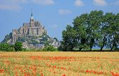 image of mont saint michel  - Cornfield with poppies in background the Mont Saint Michel on the border of Brittany to Normandy France - JPG