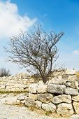 foto of kale  - Crimean birch on fortified wall ancient town chufut - JPG