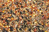 stock photo of guinea  - Dry food for hamsters guinea pigs rats birds - JPG