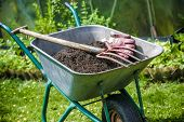 picture of humus  - Pitch fork and gardening gloves in wheelbarrow full of humus soil - JPG