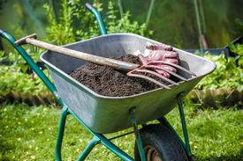 picture of humus  - Pitch fork and gardening gloves in wheelbarrow full of humus soil - JPG
