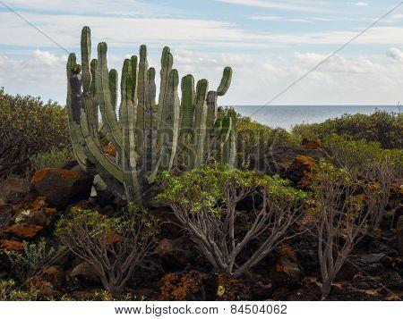 Nature Reserve Of Malpais De Rasca