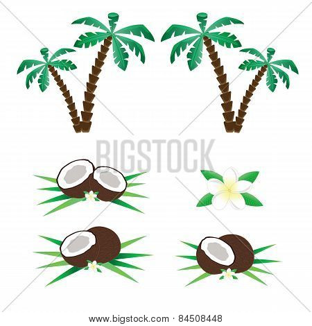 Palms and coconuts