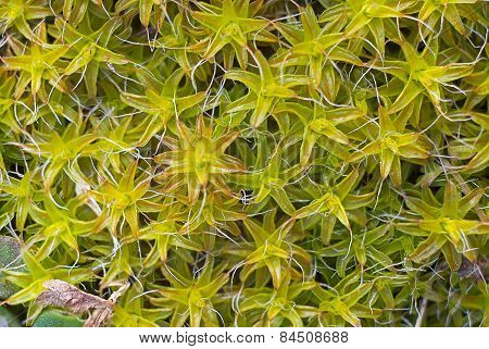 macro picture of vegetation background