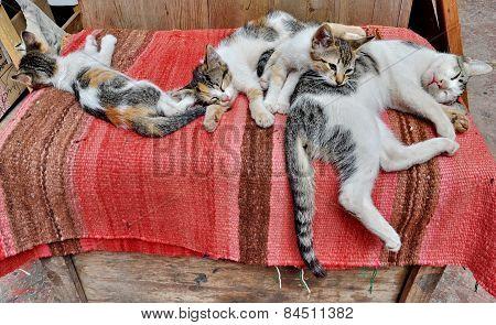 Cat Family Resting