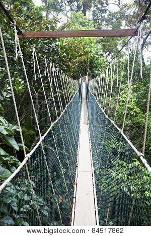 Canopy walkway. Taman Negara National Park. Malaysia