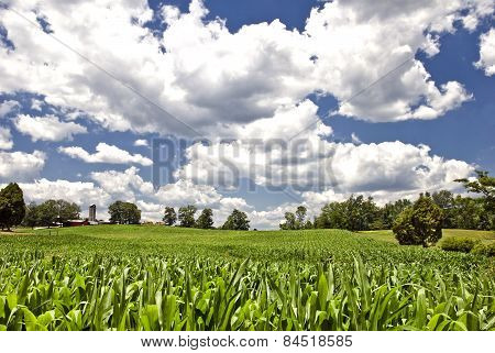 Corn Field With Clouds On A Summer Day